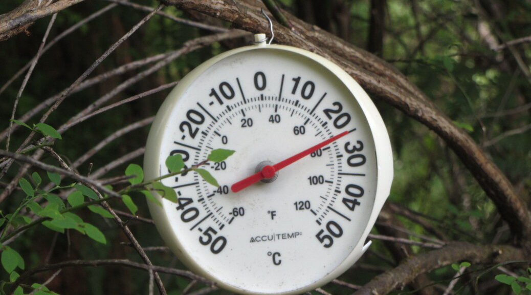 temperature gage hanging from a branch in the forest