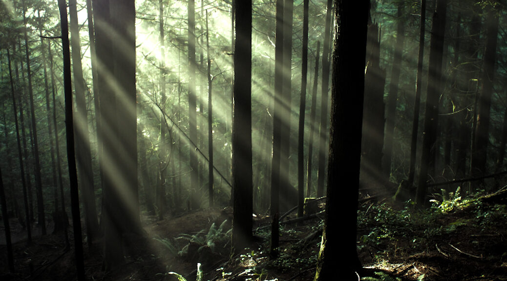 Light coming through a forrest