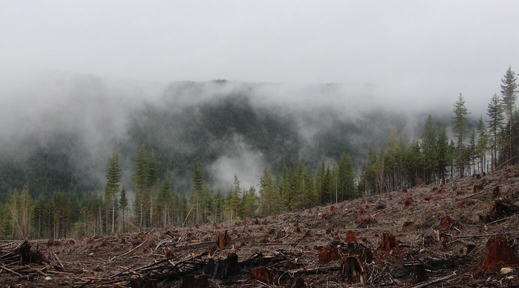 mist rising from clearcut